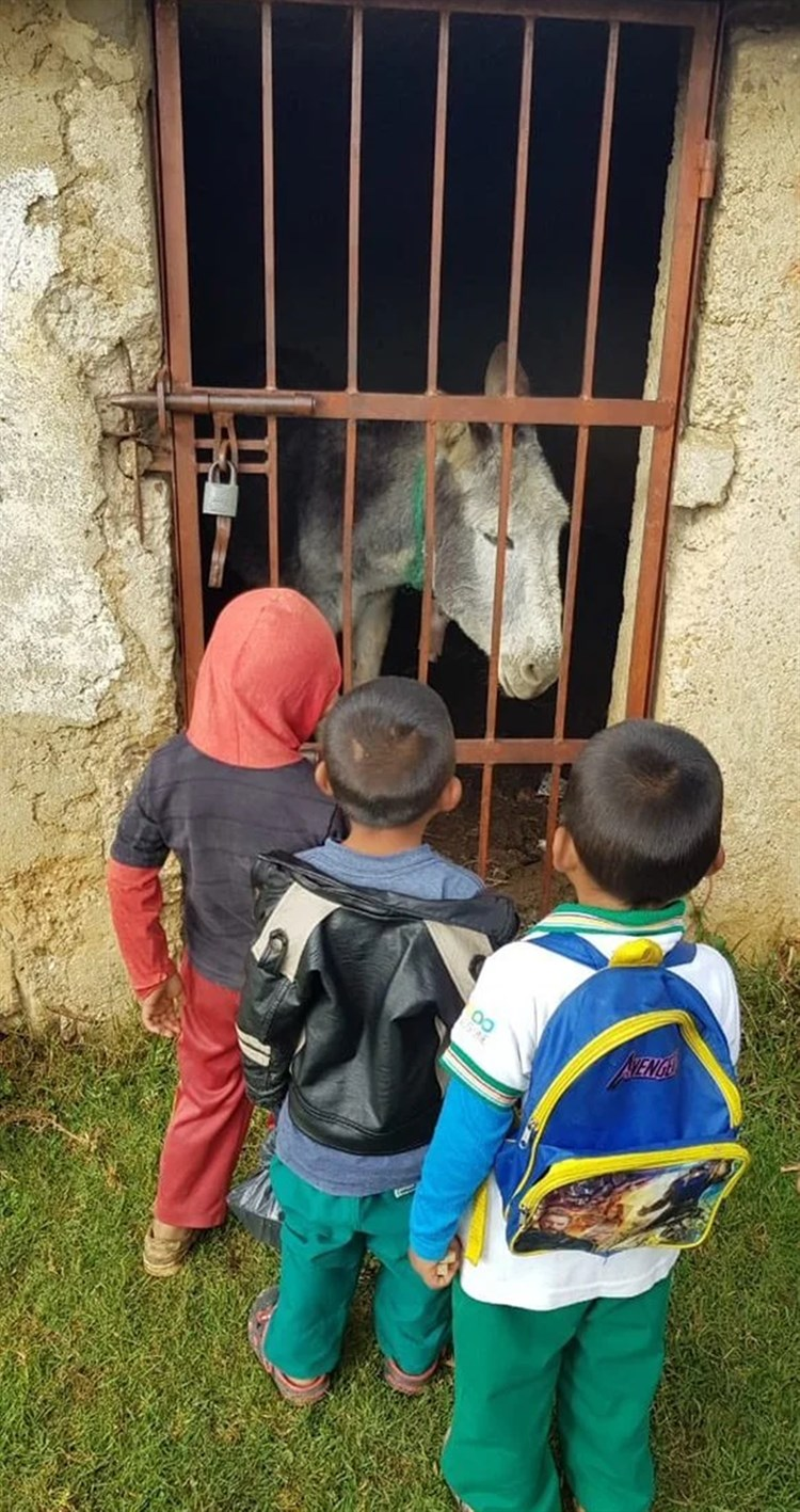 Encarcelan burro en Chiapas; no le dan de comer.