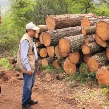 Aseguran tala ilegal en zona de mariposas monarca.