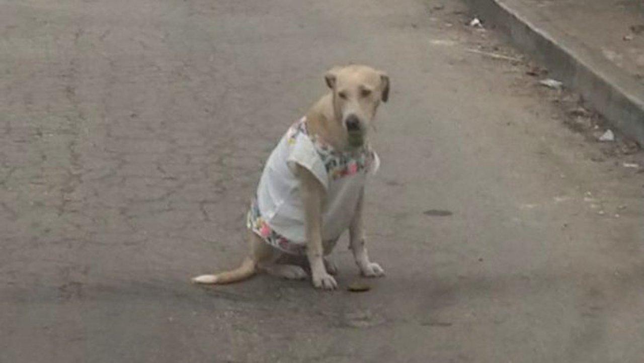 Artesanos de Yucatán vistieron a una perrita con un huipil para cubrirla del frío
