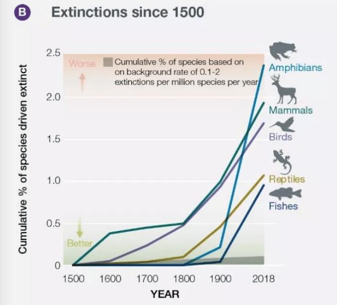 Estas son las especies extintas de la década.