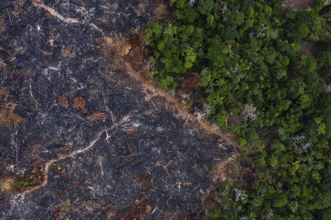 Amazonía podría convertirse en una saba por la deforestacion en su territorio