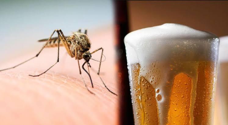 Mosquitos prefieren picar a quienes beben cerveza