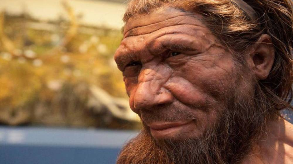 Neandertales Practicaban Buceo Para Recolectar Conchas De Mar