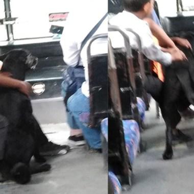 Chofer dejó subir a un perrito a su camión en Puebla.