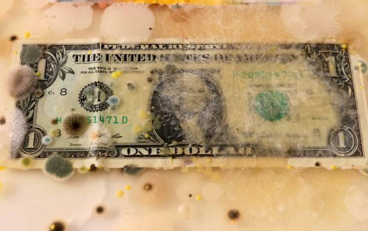 Billetes concentran hasta 3 mil tipos de microbios.