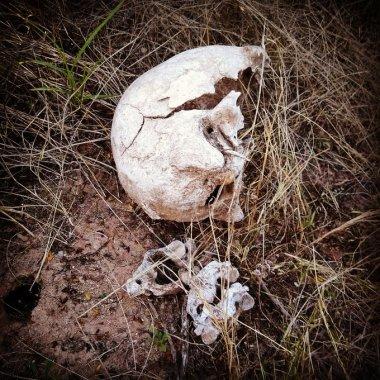 Madres Buscadores de Sonora encontraron restos óseos de al menos 4 personas