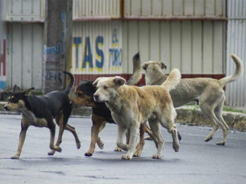 Perros Abandonados: México Tiene El Primer Lugar En América Latina
