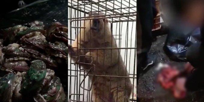 En el mercado de Wuhan comercializaban con animales silvestres