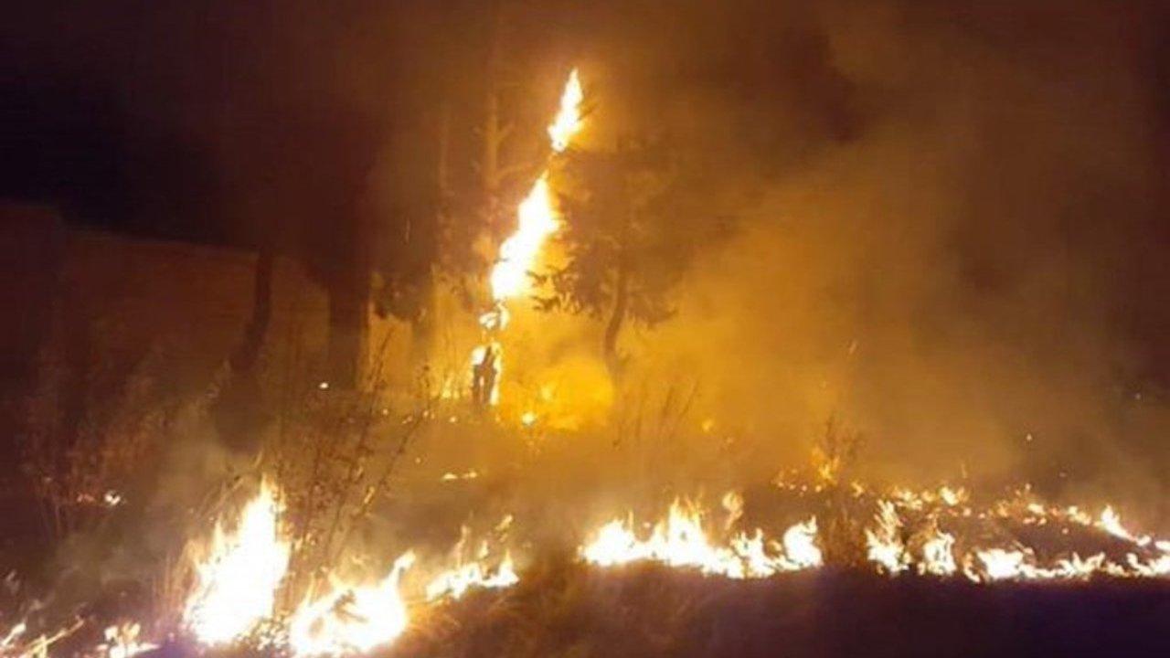 En EdoMex incendiaron un refugio de animales (Imagen: El Universal)