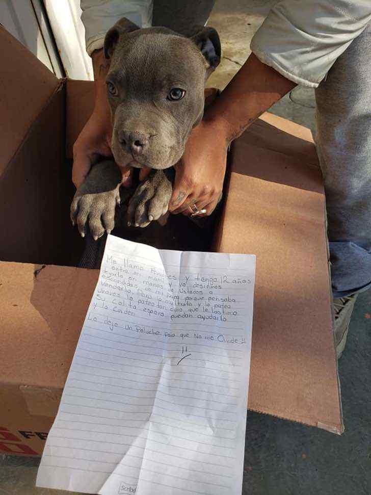 Niño da en adopción a su perro para que su papá no lo maltrate