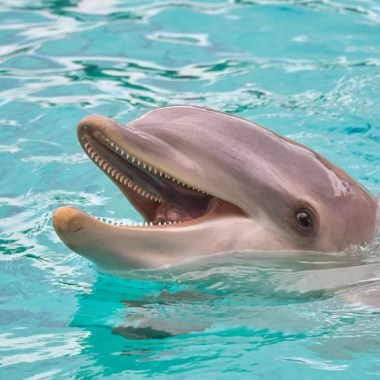 Ofrecen recompensa de 20 mil dólares por información sobre asesinos de delfines
