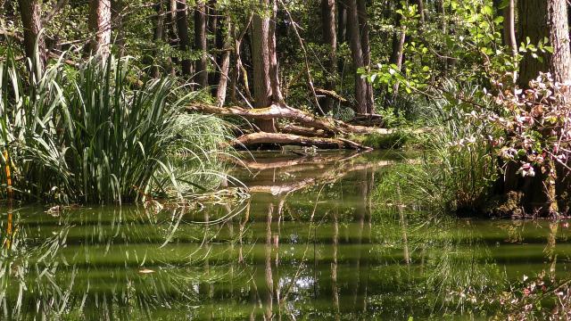 Amazonas, Carbono, Incendios, Cambio Climático