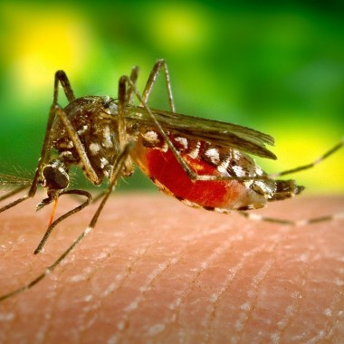 Dengue, Epidemia, Latinoamérica, México