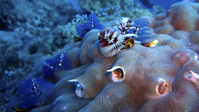 Animales, Océano, Virus, Estudio