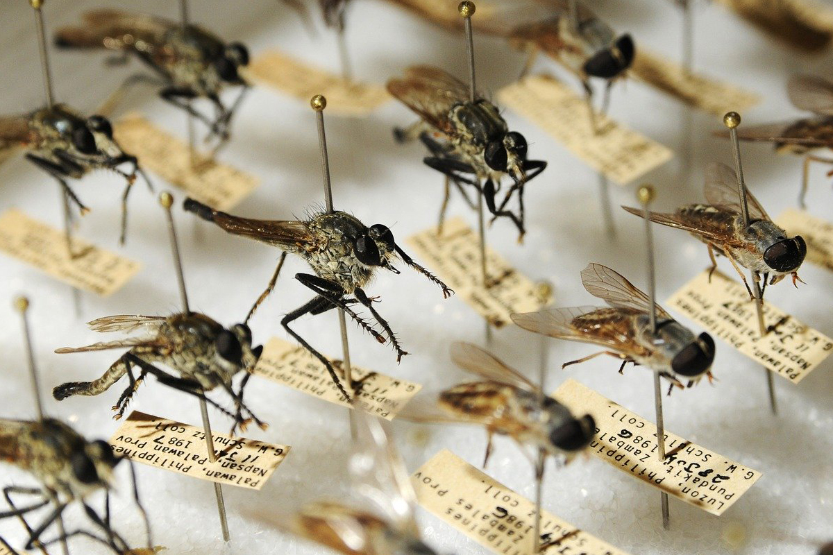 Mosquitos, Google, Debug, Dengue