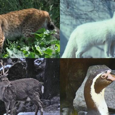Zoológico, Coronavirus, Sacrificar Animales, Alemania
