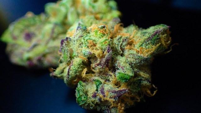 cannabis-incienso-biblico-alucinogeno
