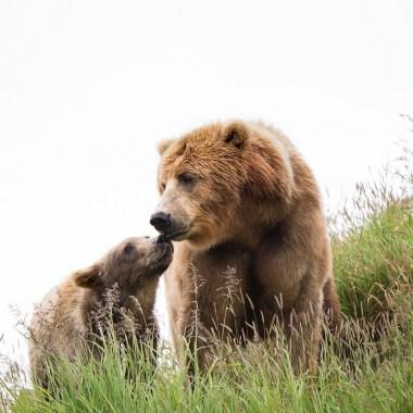 donald-trump-alaska-cazadores-oso