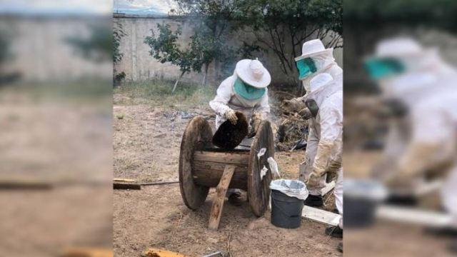 Rescatan enjambres de abejas en Gómez Palacio