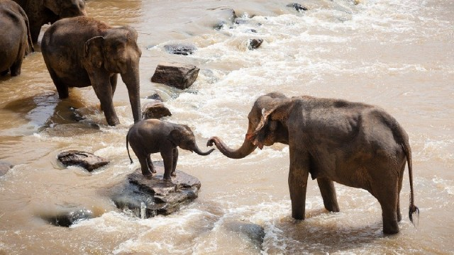 Elefantes, Muertos, Botsuana, Muerte Misteriosa