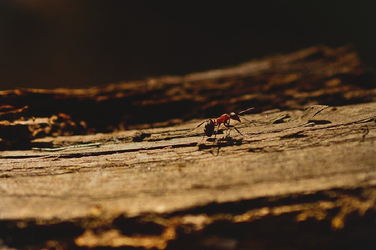 En Reino Unido se presentaron enjambres de hormigas voladoras, algunos enjambres fueron detectados por radares meteorológicos