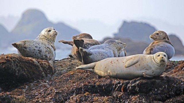 Un turista golpeó a una cría de león marino, el turista utilizó su zapato para golpear a la cría en la cabeza