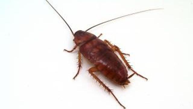Captan imágenes posible plaga cucarachas Tlatelolco