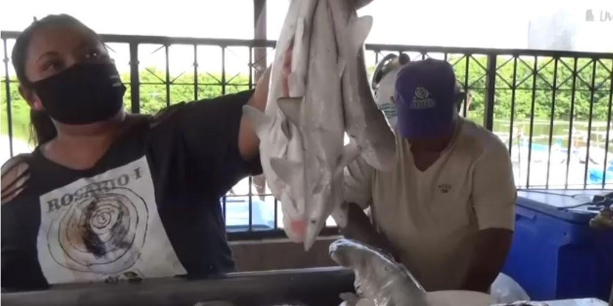Levantan veda pesca tiburón Campeche