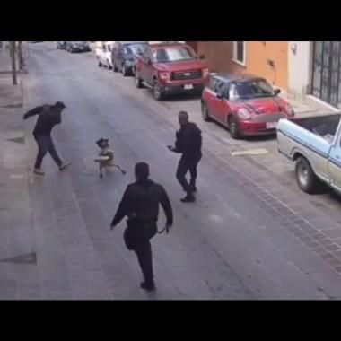 Video muestra al hombre agrediendo a Rocko, un perro policía en Zacatecas en cumplimiento de su deber