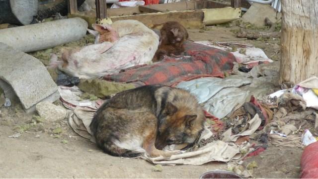 SSC CDMX podrá ingresar casas rescatar animales maltratados