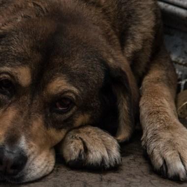 Prisión hasta 6 años zoofilia Coahuila