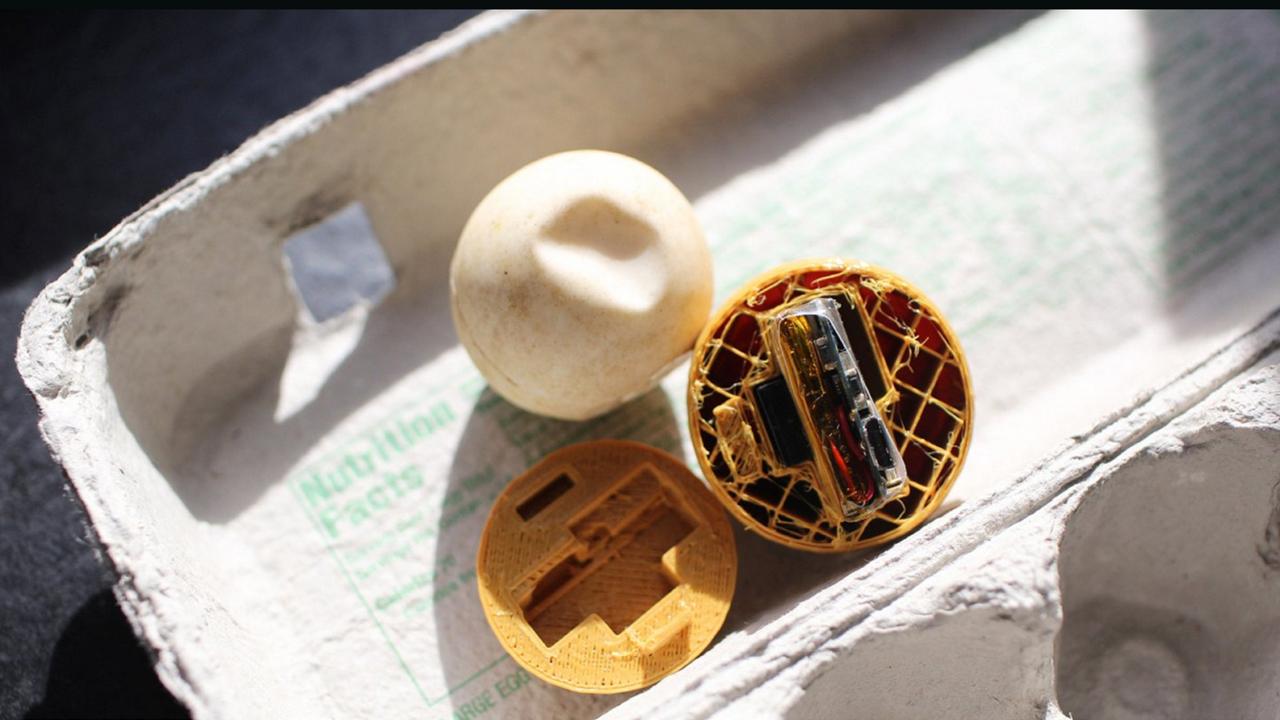 Los creadores de los huevos de tortuga en 3D, InvestEggator, esperan que esta medida ayuda a combatir la caza furtiva silvestre