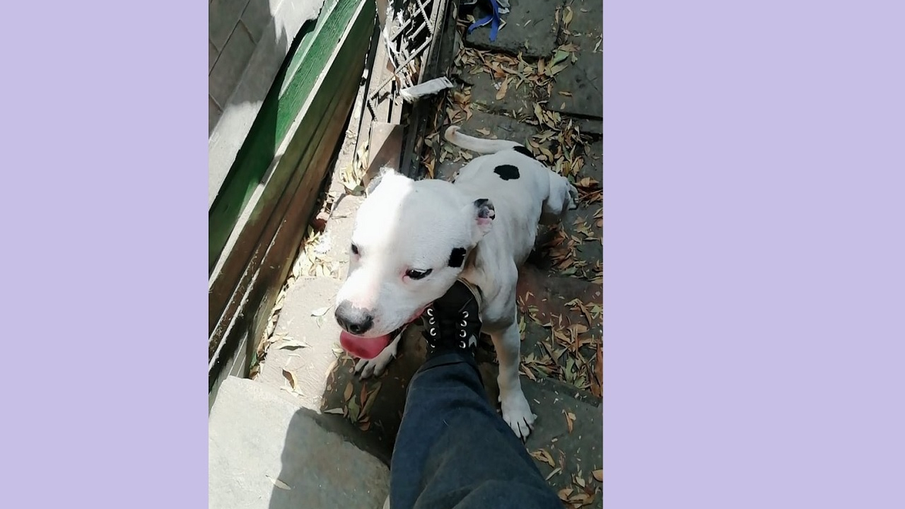 roban alimentos perritos casa del perro salchicha CDMX