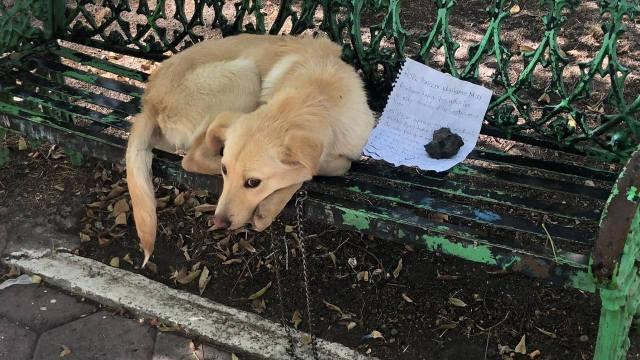 perrito abandonado banca nota dueño CDMX