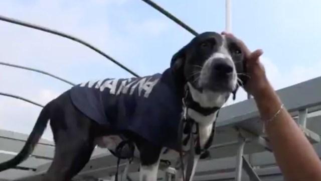 Semar rescata segundo perrito inundaciones tabasco