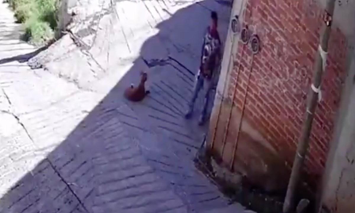EDOMEX: Un hombre le rompe una botella de vidrio en la cabeza a un perro [Video]