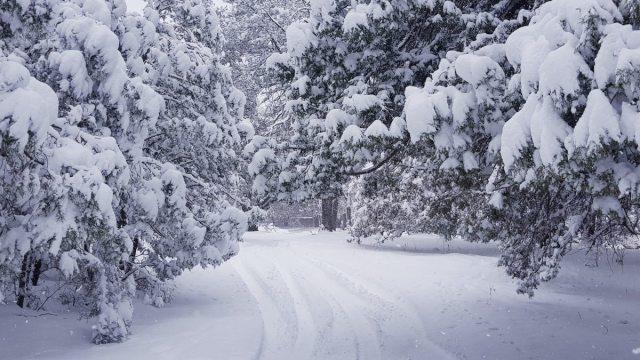 Fotos de la nevada en Chihuahua.