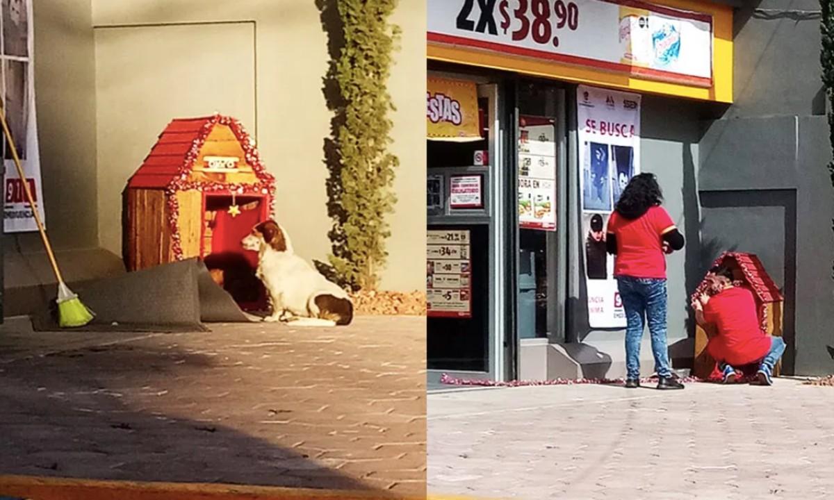 A través de las redes sociales ha circulado la historia de un perro conocido como 'Migajón'