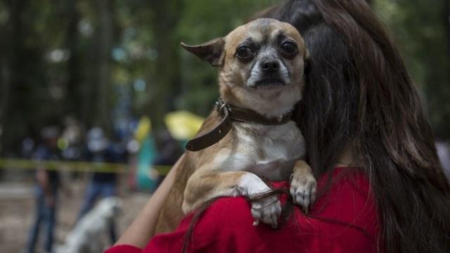 perritos rescatados Puebla adoptados Canadá