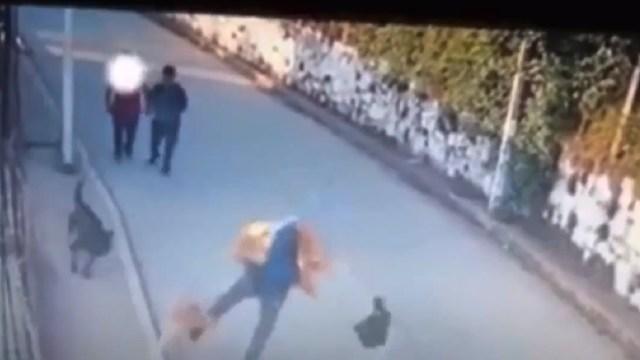 video sujetos matan patadas perro labrador Oaxaca