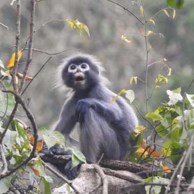 Científicos encuentran nuevas especies 2020