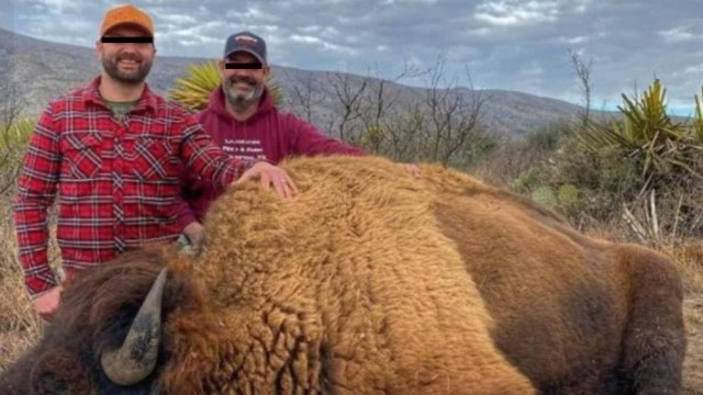 Conanp desmintió presunta caza bisontes Coahuila
