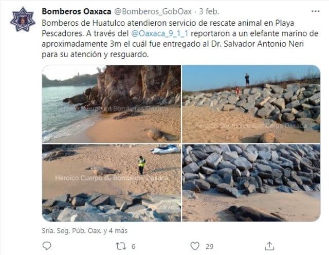 Bombero Oaxaca elefante marino