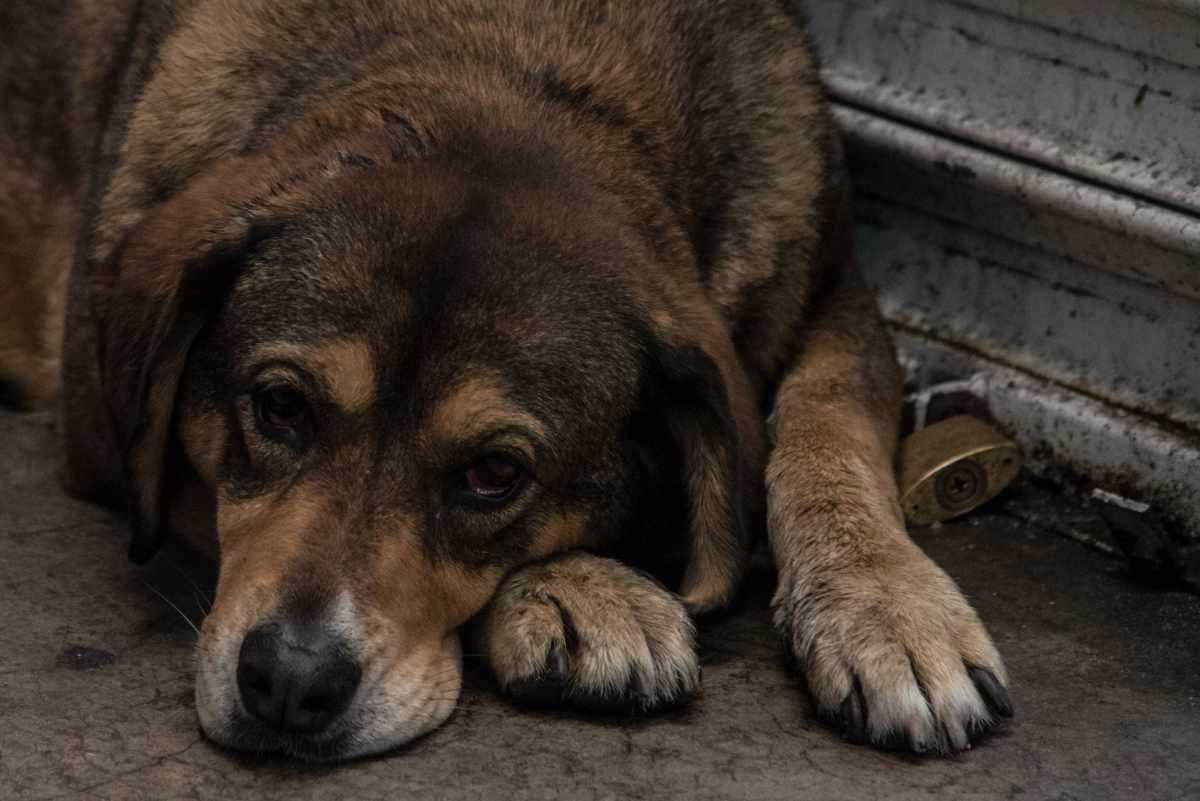 Las únicas cirugías permitidas en animales serán las recomendadas por un veterinario