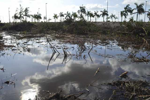 Destrucción de manglar Tajamar en Cancún