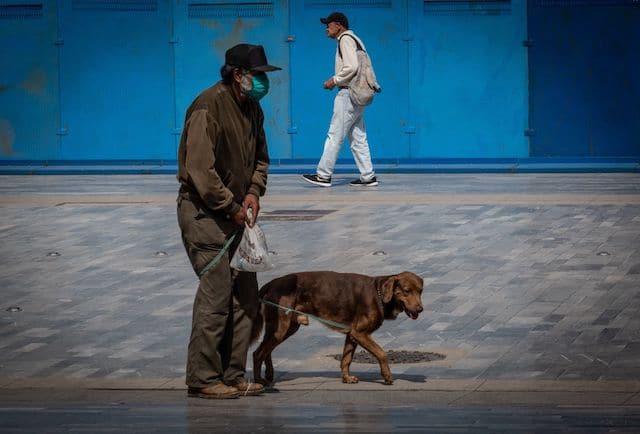 CDMX castigará con trabajo comunitario a quien pasee a su perro sin correa
