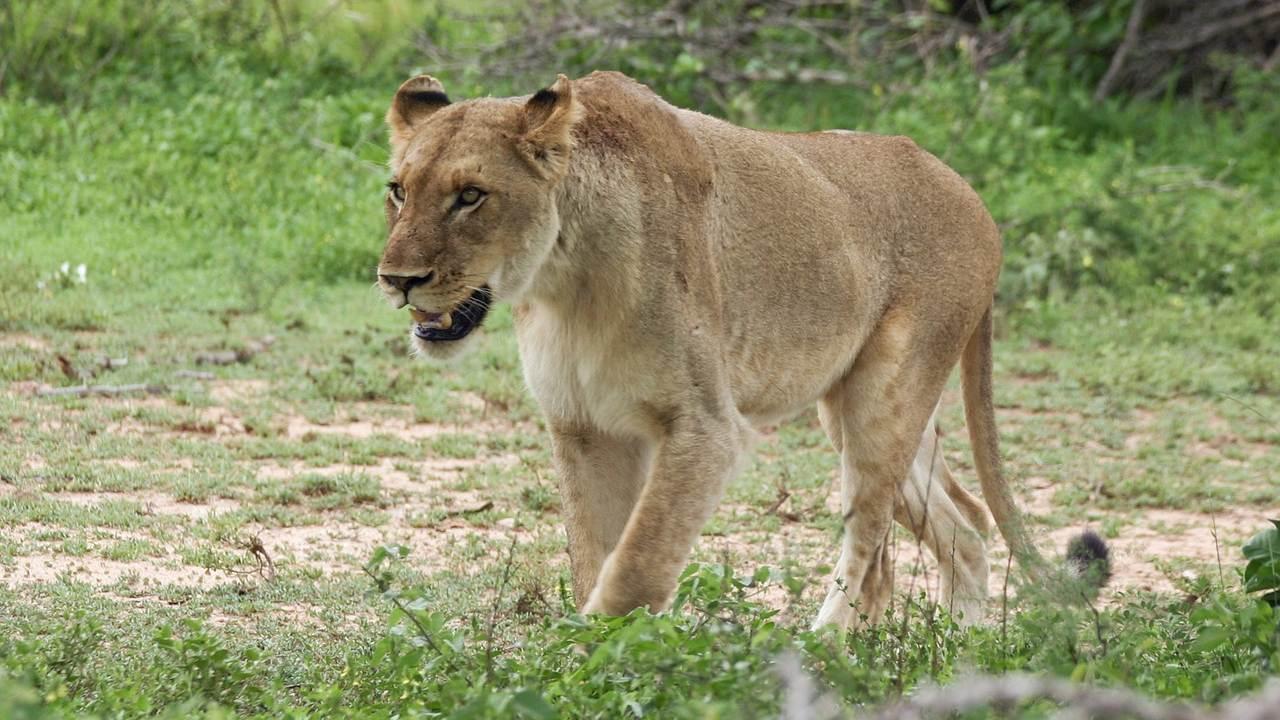 leonas devoran guía de parque Sudáfrica