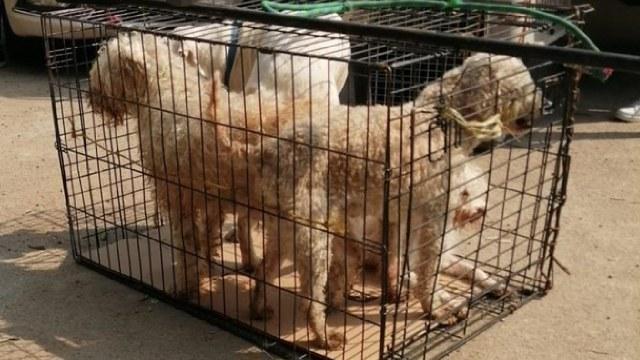 En la Ciudad de México, especifícamente en Iztapalapa rescataron a 26 perros que sufrían hacinamiento y maltrato.