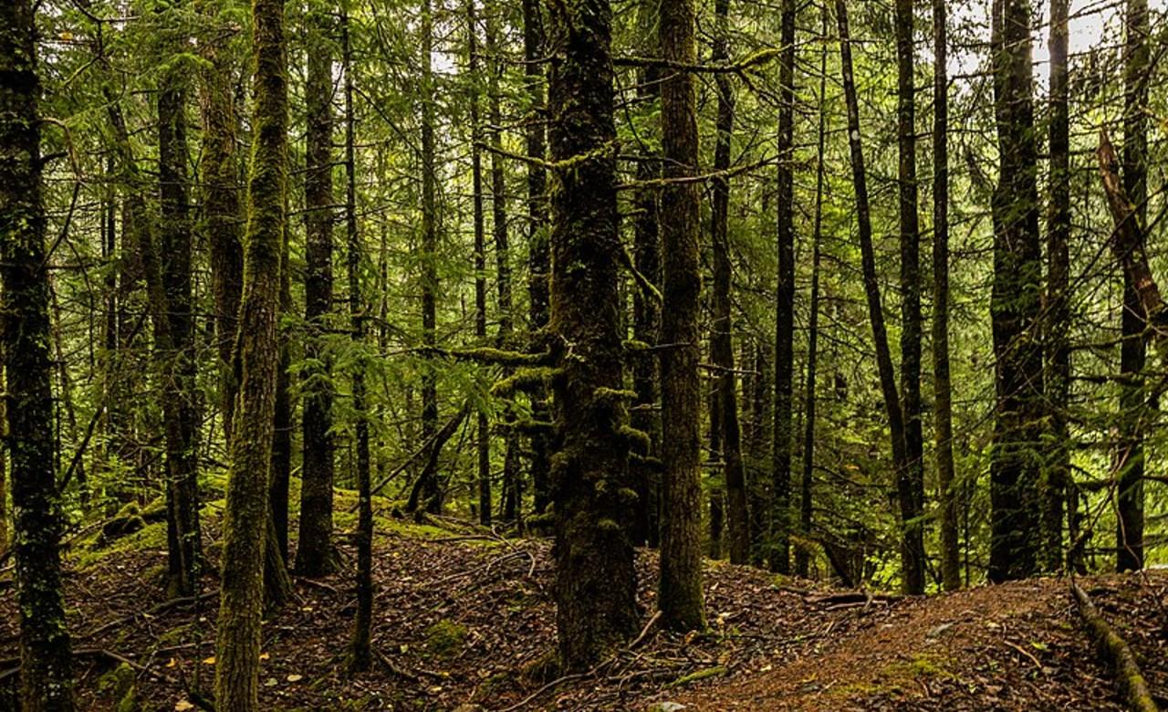 bosque activismo asesinato
