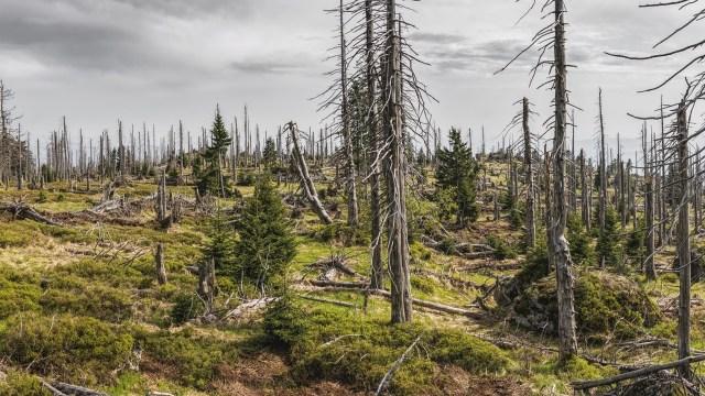 bosque protector activista